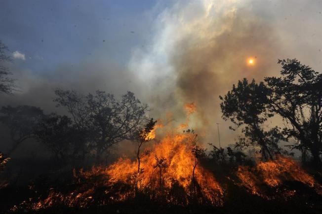 Incendios forestales en Honduras han arrasado con miles de hectáreas en 2019