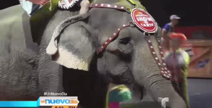 Circo se desprende de elefantes